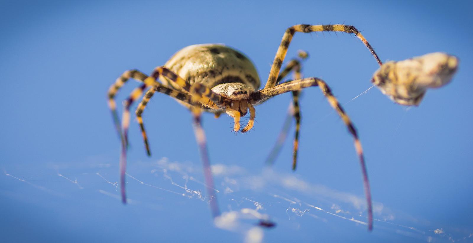 crawler-spider